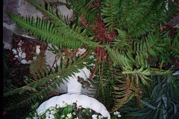 Elena lasagna blog archive botanica - La felce pianta ...