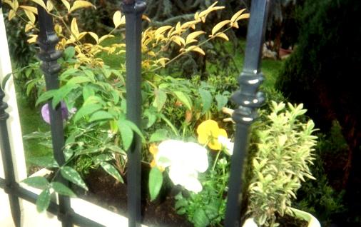 erbe e piante di boschi e giardini