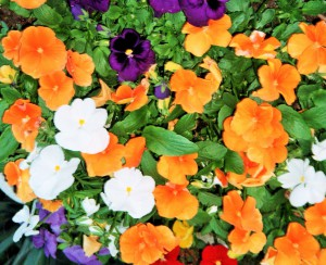 fiori per voi